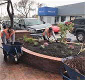 New drought-tolerant plants in downtown