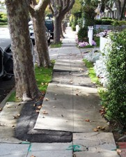 Example - Sidewalk Defect - Tree