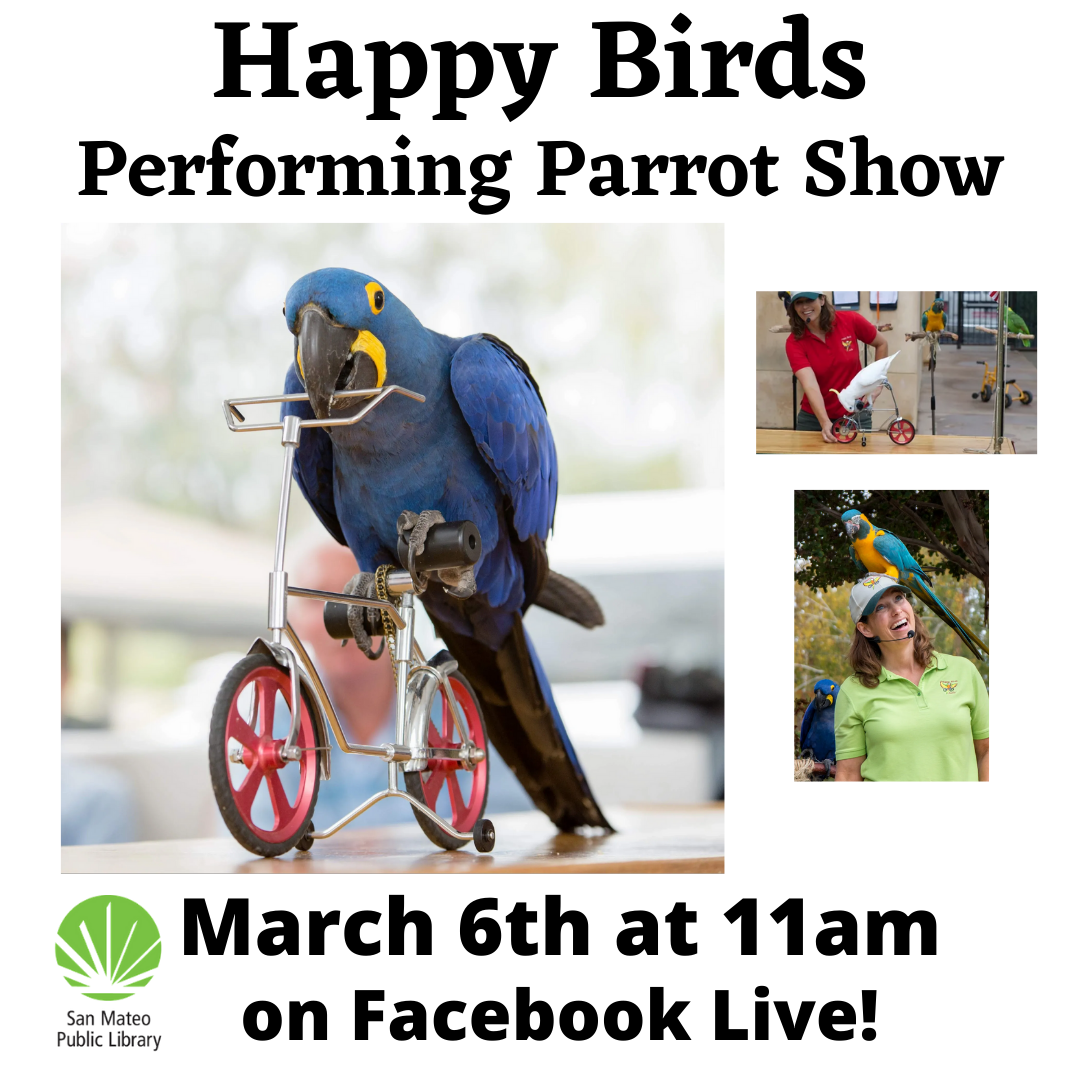 Happy Birds Performing Parrot Show on Facebook Live