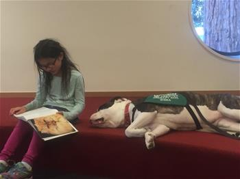 Paws for Tales - Reader and Dog