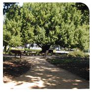Bay Tree Park